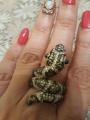 Змея потрясающей красоты!